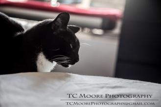 Regardless, Schrodinger's cat is always unimpressed.
