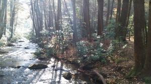 Three Forks Creek Valley