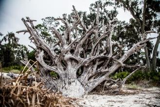 Jekyll Driftwood 03