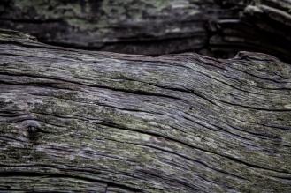 Jekyll Driftwood 28
