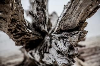 Jekyll Driftwood 32